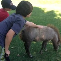 Miniature Horse Ranch
