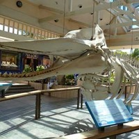 Whalers Village Museum - Whale Skeleton
