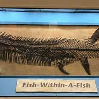 Famous Fish-Within-A-Fish Fossil