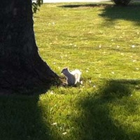White Squirrels of Bowling Green