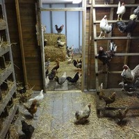 River Country Nature Center: Taxidermy Chicken Coop