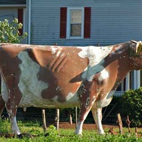 Big Cow of Middlebush