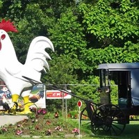 Big Rooster Spits Water, Pulls Buggy