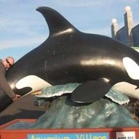 Giant Orca - Killer Whale Statue