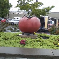 Quality Tomato Capital of the World Statue
