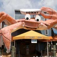 Tommy the World's Largest Crab