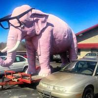 Pink Elephant With Glasses