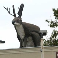 Big Jackalope on a Roof
