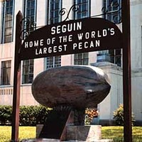 World's Oldest Largest Pecan
