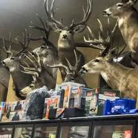 Taxidermy-Filled Grocery Store