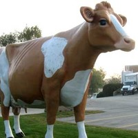 Gertrude Basse the Cow