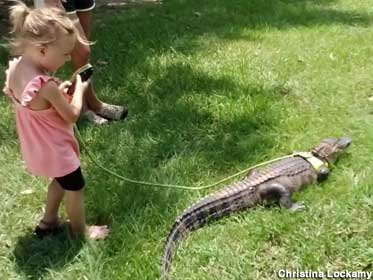 Gator on a leash.