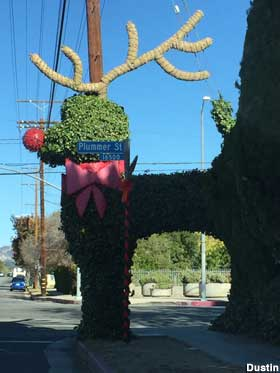 Topiary reindeer makeover.