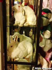 Stuffed rabbit pets.