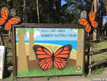 Monarch Butterfly Grove.