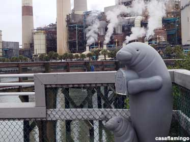 Power Station manatees.