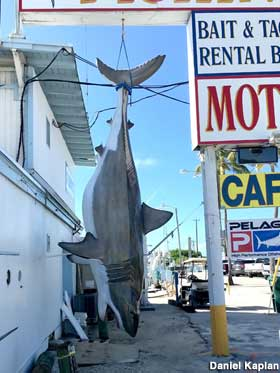 Motel Shark Catch.