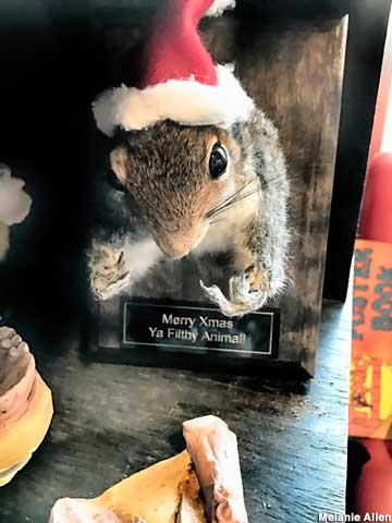 Mounted squirrel in holiday spirit.
