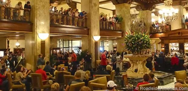 Peabody Duck fans await the evening exit.
