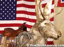 Ride the Jackalope